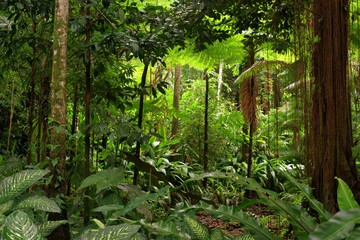 rainforest, Queensland, Australia
