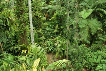 Botanic Garden in Cairns, Queensland (Australia)