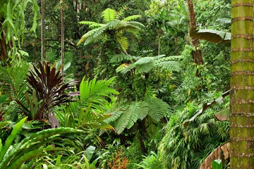 tropical garden in North Queensland, Australia