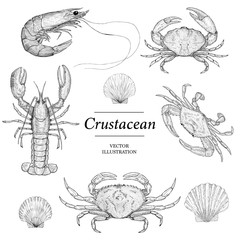 Hand Drawn Crustacean and Shell Illustrations