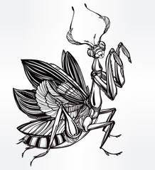 Beautiful hand drawn Mantis beetle.