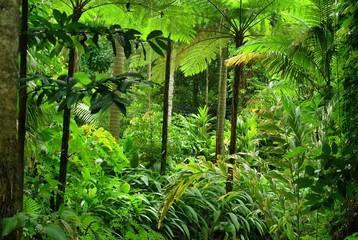 Tropical Garden in Cairns, North Queensland, Australia
