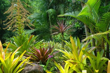 Tropical Garden in Cairns, North Queensland, Australia