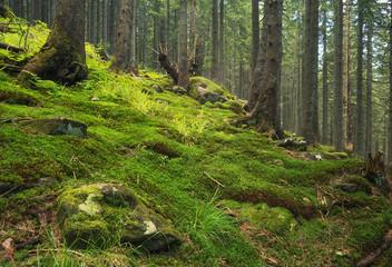 Forest as a background. Natural summer landscape