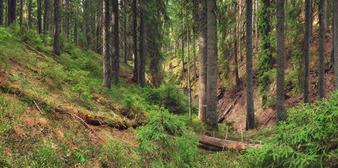 Forest background in the summer time. Beautiful natural summer panoramic composition