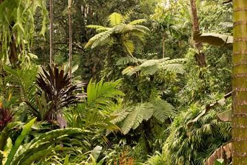 Botanic Garden in Cairns, Queensland, Australia