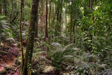 Mossman Gorge, Daintree National Park, Queensland, Australia
