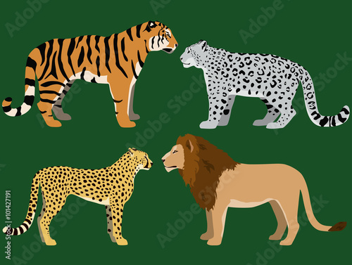 Illustration of lion, tiger, cheetah and snow leopard.