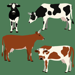 Cows illustration set.