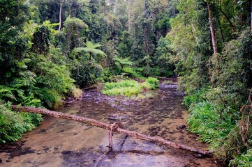 Henrietta Creek, near Innisfail, North Queensland, Australia