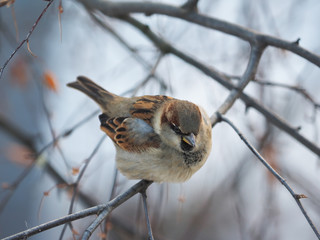 sparrow in the forest
