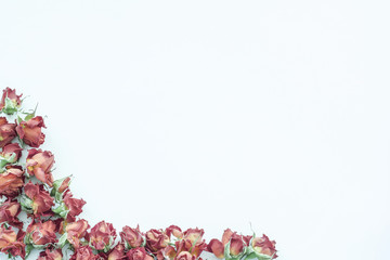 background with rosy roses isolated on white with sample text. Frame.