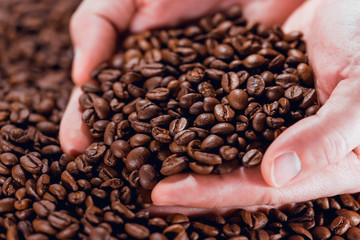 Coffee beans in the palms