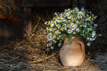 Bouquet of wild daisies in a pitcher. Hay barn, rural life, tools in the background, natural light