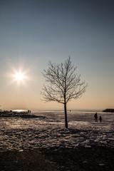 Silhouette von Baum vor gefrorenem See bei Sonnenuntergang