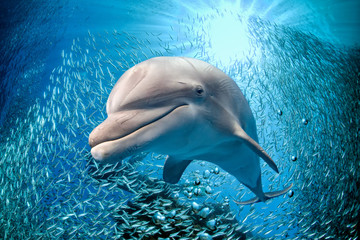dolphin underwater on blue ocean background