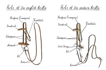 Part of english and western bridle with bit on white. Equestrian leather harness. Horse riding tack equipment, vector.