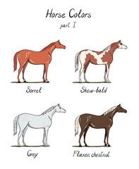 Set of horse color chart on white.  Equine coat colors with text. Equestrian scheme. Sorrel, grey, types of horses. Vector hand drawn illustration.