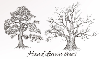 Vector hand drawn high detailed trees for design