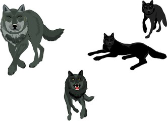 Isolated on white set of vector wolves, in various poses