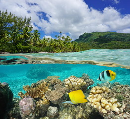 Above and below surface lagoon French Polynesia
