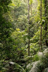 Daintree National Park, rainforest scenery in Queensland, Australia