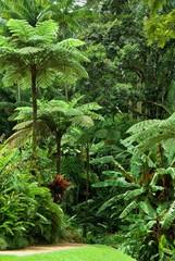 tropical garden in North Queensland, Australia