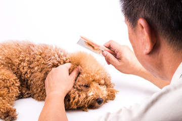 Groomer combing dog, with de-tangled fur stuck on comb