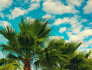Palm trees against sky with light clouds