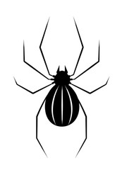 Black spider isolate