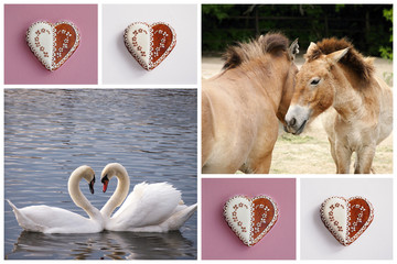 Love symbol pictures collages - sweet hearts, white swans, couple of horses