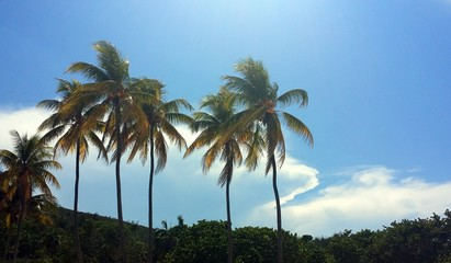 Palm trees against blue sky with white clouds