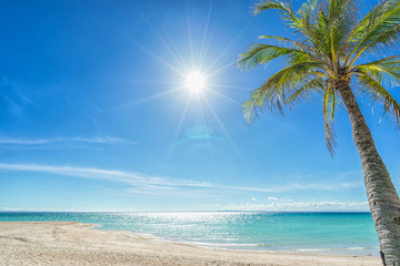 Wallpaper:  beautiful and empty beach, sun and palm.