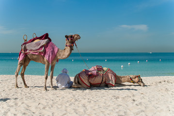 Bedouin with camels on the beach