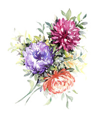Watercolor lilac, pink and red asters. Hand made illustration.