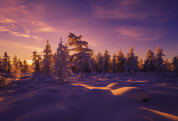Poster Aubergine Winter Evening Landscape with forest and sunset