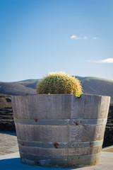 Kaktus in Holzzuber auf Lanzarote in Spanien