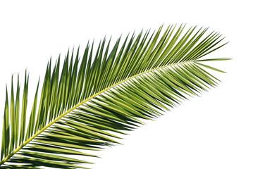Photo sur cadre textile Palmier Feuille de palmier