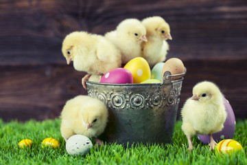 Bucket full of easter eggs and chicken