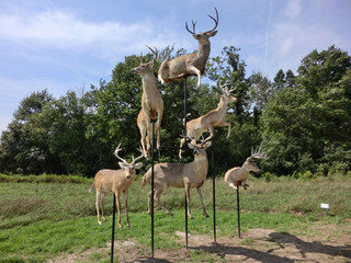 Deer taxidermy in artistic type display - landscape photo
