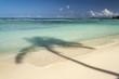 Palm shadow on beach