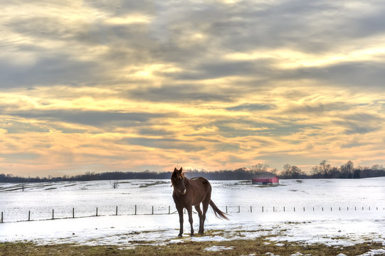 Horse standing in a field of snow on a Maryland farm in Winter