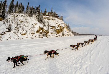 2015 Iditarod Dog Team