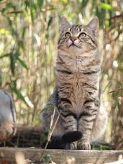 見上げる子猫
