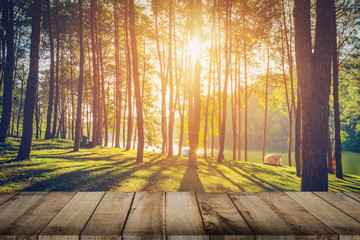 Pine tree forest and wood plank floor with sunrise. Vintage styl