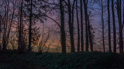Bäume im Wald am Morgen