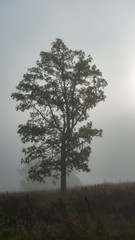 Tree silhouetted against fog