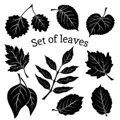 Set of Pictograms, Plant Leaves, Hawthorn, Poplar Silver, Aspen, Hazel, Linden, Ash-tree, Poplar, Elm Karagach. Black on White Background. Vector