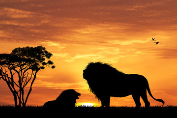 lion silhouette at sunset