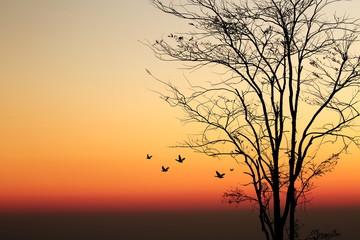 Sunrise and silhouette tree on beautiful colors sky.